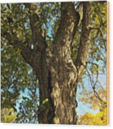 Old Elm Trunk In The Park Wood Print