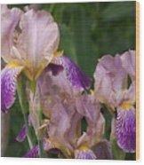 Old-fashioned Iris Wood Print