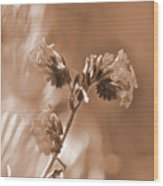 Old Fashioned Wild Flowers  Wood Print
