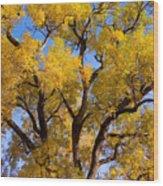 Old Giant  Autumn Cottonwood Wood Print