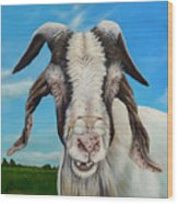 Old Goat - Painting By Cindy Chinn Wood Print