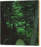 Old Growth Forest At Lost Lake On Mount Hood Wood Print