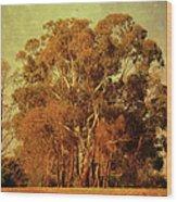 Old Gum Tree Wood Print