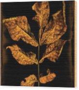 Old Hickory Leaf Wood Print