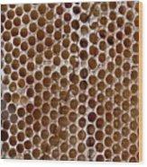 Old Honey Comb Bee Hive  Wood Print