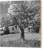 Old House 1279 - Hwy 57 Wood Print