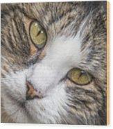 Old Kitty Wood Print