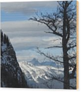 Old Larch Tree Has Best View Wood Print