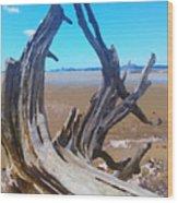 Old Log On Auckland Beach Wood Print
