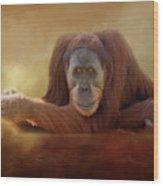 Old Man Orangutan Wood Print