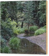 Old Mill Park In Mill Valley 2 Wood Print