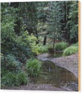 Old Mill Park In Mill Valley Wood Print