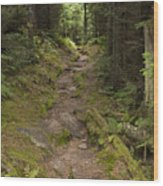 Old Mitchell Trail In Spruce-fir Forest Wood Print