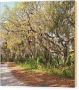 Old Oak Trees And Moss Wood Print