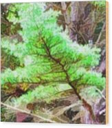 Old Pine Tree 1 Wood Print