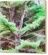 Old Pine Tree Wood Print