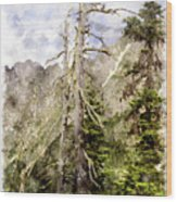 Old Pines Cascades Wc Wood Print
