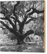 Old Plantation Tree Wood Print