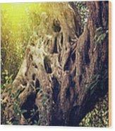 Old Sacred Olive Tree  Wood Print
