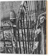 Old Steps And Railings Wood Print