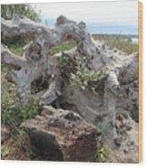 Old Stump At Gold Beach Oregon 4 Wood Print