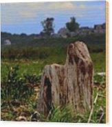 Old Stump Wood Print