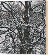 Old Tree 5 Wood Print