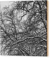 Old Tree 6 Wood Print
