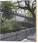 Old Tree And Ornate Fence Wood Print