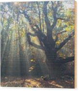 Old Tree And Sunbeams Wood Print