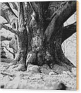 Old Tree Ground Up Wood Print