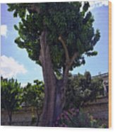 Old Tree In Palermo Wood Print