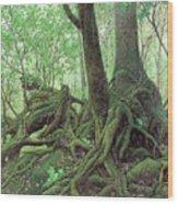 Old Tree Root Wood Print