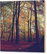 Old Tree Silhouette In Fall Woods Wood Print