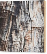 Old Tree Stump Tree Without Bark Wood Print