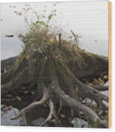 Old Tree Stump With Flowers Wood Print