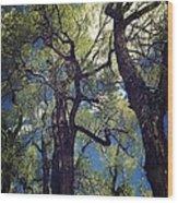Old Trees Wood Print