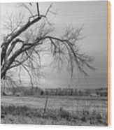 Old Winter Tree Grayscale Wood Print