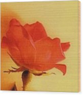Old World Rose Wood Print