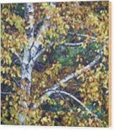 Old Yellow Birch Wood Print