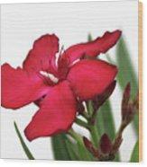 Oleander Blood-red Velvet 2 Wood Print