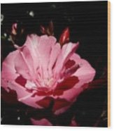 Oleander Bloom Wood Print