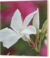Oleander Casablanca 2 Wood Print