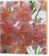 Oleander Dr. Ragioneri 4 Wood Print