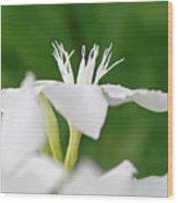 Oleander Ed Barr 1 Wood Print