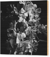 Oleander Flowers In Black And White 2 Wood Print
