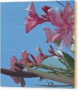 Oleander Flowers Wilting In The Brutal Florida Sun    Wood Print