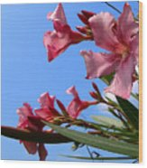 Oleander Flowers Wilting In The Brutal Florida Sun  Wood Print