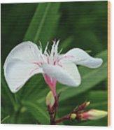 Oleander Harriet Newding  1 Wood Print