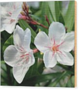 Oleander Harriet Newding 3 Wood Print